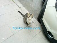 猫目線で猫の写真を撮るのが実は難しい理由とは?