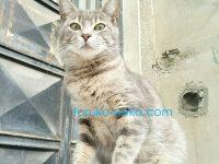 グレイ色の野良猫を思いっきり下から撮ってみるとどうなる?トルコ猫歩き イスタンブール