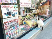 トルコ イスタンブールで幸せそうな写真に見入る猫の写真 画像