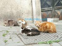 トルコの猫も井戸端会議がお好きなのかな?4匹の猫が会議中の所の写真 画像 トルコ猫歩き
