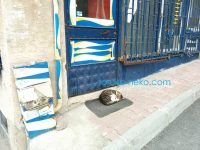 イスタンブールで猫はドアの前の足拭きマットの上でお昼寝をする