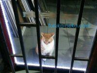 お家の中に入れられたトルコの猫は、幸せなのか?