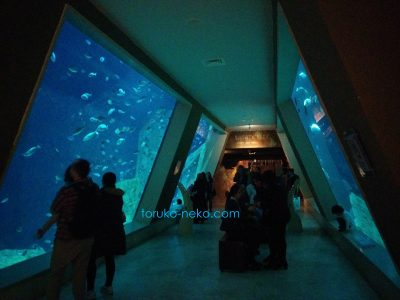 イスタンブール水族館の中の写真 画像 通り抜け水槽