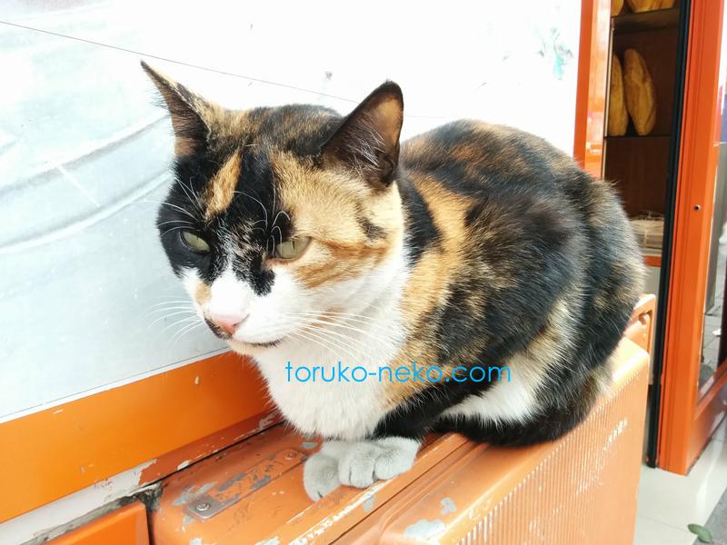 三毛猫が一匹 トルコ イスタンブールの店の前で丸くなっている写真 画像 写真の撮り方