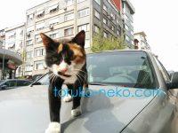トルコの野良猫に思いっきり近づいて写真を撮ってみる