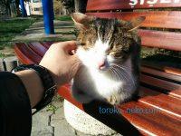 春の温かい日にベンチでお昼寝中のイスタンブールの猫の画像 写真 トルコ 可愛い寝顔