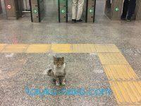 トルコにだっているもん!駅猫、可愛い猫の駅長の写真 画像