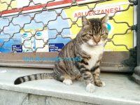 猫は基本的に撫でてもらいたい動物なのであーる!猫の可愛がり方:続編。写真 画像付き解説