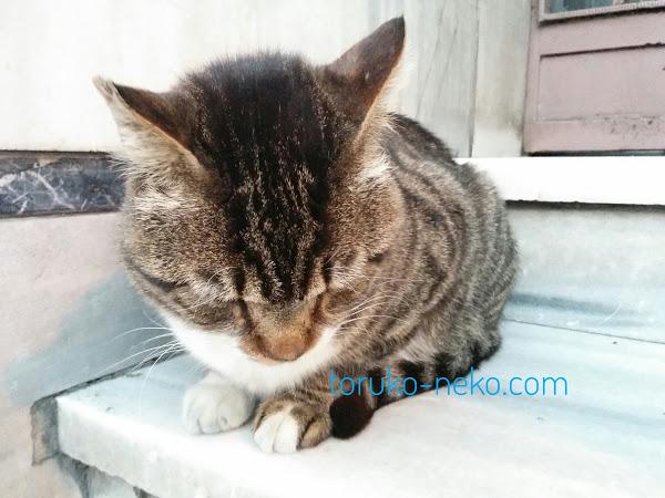 トラ猫 一匹の可愛い猫が 下を向いている写真 画像 イスタンブール トルコ 猫歩き