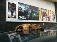 寝ながら何の夢を見ているのかな~トルコ猫 イスタンブール