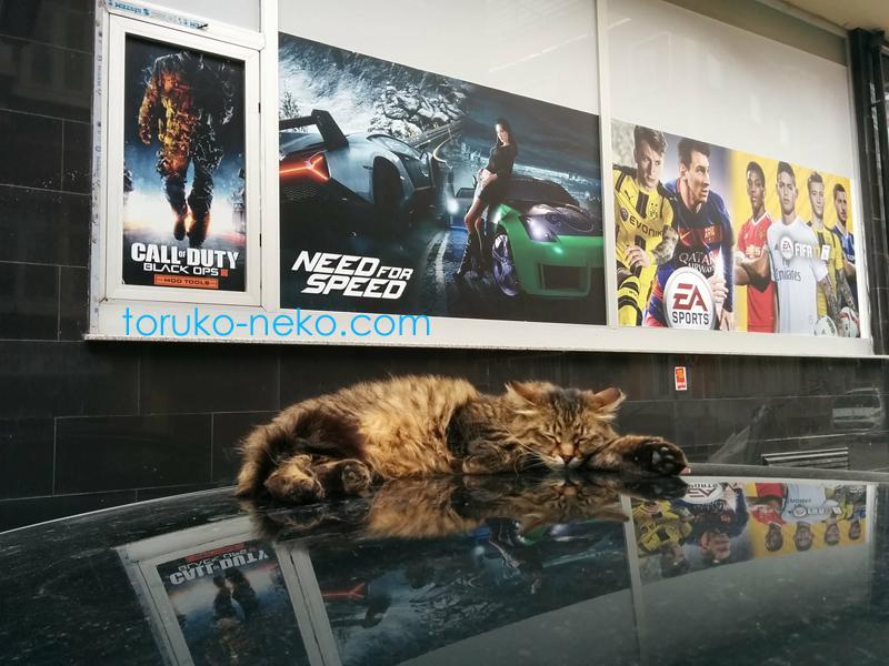 寝ながら夢を見ている猫 ネコ イスタンブール トルコ プレイステーション 映画
