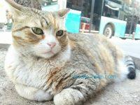 トルコイスタンブールのグレー色プクプクの可愛い猫の写真 画像