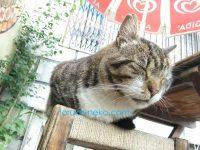 お昼寝中の猫と一緒に寝てる感じのアングルの写真 画像 トルコ猫歩き