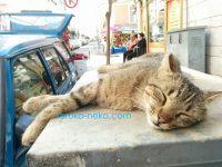 ぺろ~んと寝っ転がる猫ちゃん トルコ猫歩き イスタンブール
