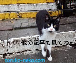 トルコ 猫 歩き ブログ