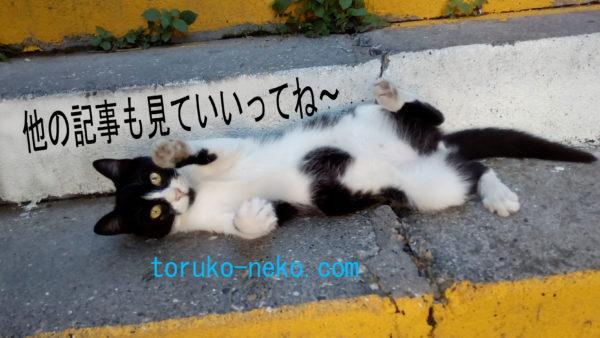 トルコ猫歩き ブログ