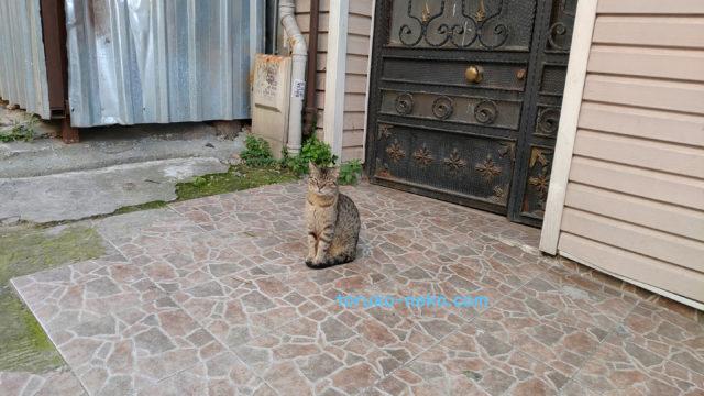トルコ 猫 猫歩き ブログ リオン キジトラ猫 リラ 円高 トルコリラ安 コロナウイルス